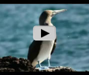 Galapagos Islands wildlife video